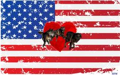 America hearts wolves! New poll shows 1 in 3 voters value wolves and want them to be federally protected.
