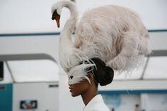 Photographed by Rachel Chandler Guinness; from Vogue Daily — Take It From the Top: The Best Hats at the 2012 Royal Ascot Races Royal Ascot Races, Giles Deacon, Ascot Hats, Women's Hats, Crazy Hats, Fancy Hats, Love Hat, Derby Hats, Headdress