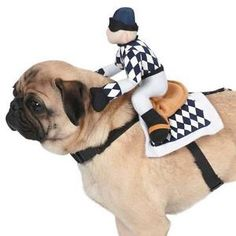 Zack & Zoey Show Jockey Saddle Costumes. It's off the to races for dogs who like a sporting look, with the Zack & Zoey® Show Jockey Saddle Costume! With adjustable nylon neck and belly straps and plastic buckles for a secure fit. Cute Dog Costumes, Dog Halloween Costumes, Costume Ideas, Halloween Items, Pet Dogs, Pets, Pet Puppy, Designer Dog Clothes, Animal Rescue Site
