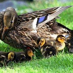 Moederliefde.....