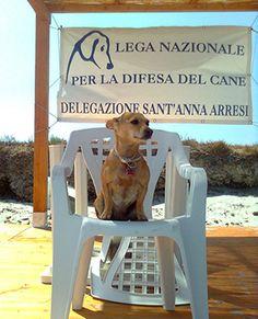 """In Sardegna la vacanza è davvero a """"misura di cane"""""""