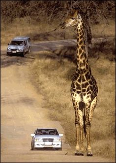 Kruger Park - South Africa RePinned by : www.powercouplelife.com