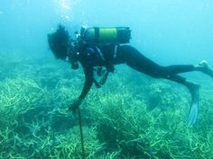 I started with my study doing daily dives to record the benthos cover on the reefs of Vamizi Island, first inside and then outside the sanctuary. The data processing was done at the Marine Conservation and Research Centre office. I observed greater diversity and conservation of coral, compared with sites in Pemba where I have dived before #vamizi #conservation #research #vamiziconservation #IUCN #islandlife #island #indianocean #mozambique #africa #lighthouse #beach #whales