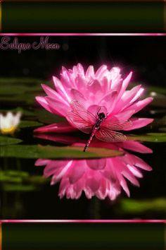 Розовый лотос и стрекоза