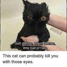 Cat eyes master level