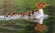Ördekler :)