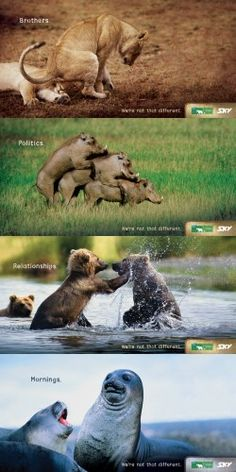 Animal Planet ads - We're not that different!