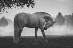 After Losing Myself, I Found Freedom In Horses | Bored Panda