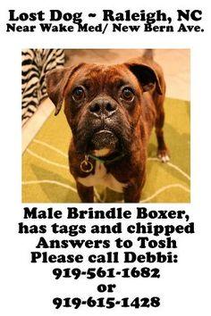 #LOST #DOG! - Friends In Rescue Unite - FB