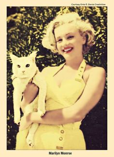 C Marilyn Monroe Celebrities With Cats, Celebs, Crazy Cat Lady, Crazy Cats, Hollywood Glamour, Old Hollywood, Marilyn Monroe Fotos, Viejo Hollywood, Richard Avedon