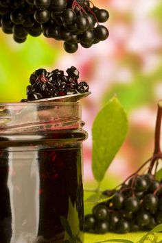 Wild Elderberry Fragrance Oil from Nature's Garden is a fabulous sweet aroma of fruity elderberries. You will go crazy for this wholesale fragrance. Elderberry Recipes, Elderberry Syrup, Homemade Soy Candles, Soap Supplies, Flavored Oils, Candlemaking, Cold Process Soap, Fragrance Oil, Smoothie