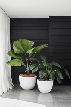 Potted Bliss: Indoor Plants 101 - Floor Plants - Ideas of Floor Plants - Potted Bliss: Indoor Plants 101 Design Field NotesDesign Field Notes Interior Plants, Interior And Exterior, Interior Design, Interior Sketch, Potted Plants, Indoor Plants, Hanging Plants, Indoor Wall Planters, Pots For Plants