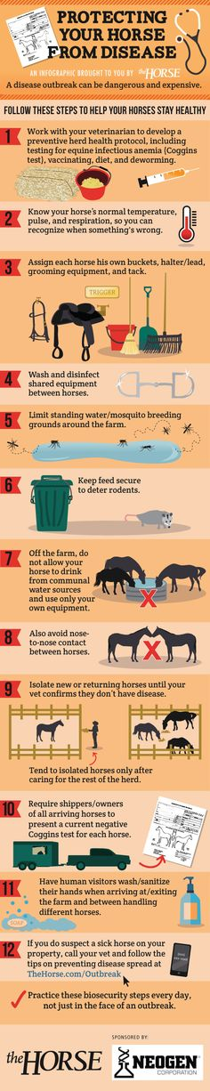 [INFOGRAPHIC] Protecting Your Horse From Disease - An equine disease outbreak can be dangerous for your horse and expensive for you. Protect your horse from infectious disease exposure by using tips from our step-by-step visual guide, brought to you by TheHorse.com and Neogen! #biosecurity #horses #horsehealth #infographic