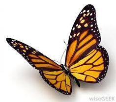 Výsledek obrázku pro insects butterfly