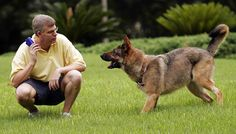 Here are some useful and Easy Dog Obedience Training Tips that can make your training procedure easier.Dog obedient training is not so easy and you will have to know something about it. Basic Dog Training, Dog Training Videos, Training Dogs, Dog Clicker Training, Deaf Dog, Alaska, Aggressive Dog, Bichon Frise, Old Dogs