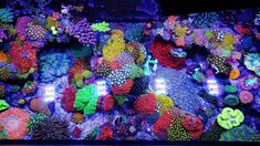 Jourdy's 90 Gallon Mixed Reef