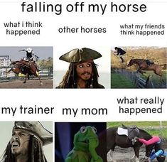 Horse - falling off my horse what i think happened what my friends think happened other horses what really happened my trainer my mom Funny Horse Memes, Funny Horse Pictures, Funny Horses, Funny Animal Jokes, Cute Horses, Horse Love, Beautiful Horses, Funny Animals, Funny Memes