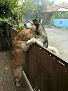 Ces animaux amoureux vous feront verser une larme de joie These animals in love will make you shed a tear out of joy – Love Your Pet Animals And Pets, Baby Animals, Funny Animals, Cute Animals, Nature Animals, Cute Puppies, Cute Dogs, Dogs And Puppies, Doggies