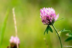 写真 ピンク色の花 202001 梅雨明けまでもう一息 My Works, Plants, Flora, Plant