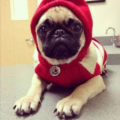 Gaston at the vet