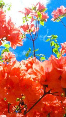 携帯待ち受け|蜷川実花オフィシャルブログ「人生気合っす!」Powered ... Look At The Sky, Natural Forms, Japanese Art, Art Photography, Flora, Watercolor, Pictures, Photos, Prints
