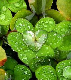 Pictures of nature. Photos of heart nature. Heart In Nature, Heart Art, Nature Nature, Nature Pics, Dew Drops, Rain Drops, Water Drops, Romantic Nature, Romantic Mood