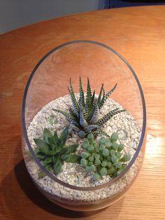 Succulent glass planter