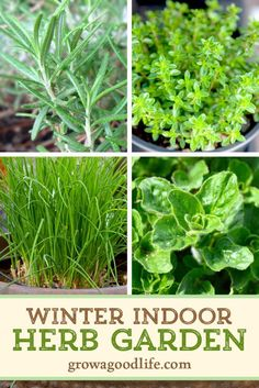 I've experimented with ways to grow herbs indoors during the winter. Here are 5 ...#experimented #grow #herbs #indoors #ive #ways #winter Spring Vegetable Garden, Vertical Vegetable Gardens, Indoor Vegetable Gardening, Starting A Vegetable Garden, Tomato Garden, Organic Gardening, Container Gardening, Texas Gardening, Herb Gardening