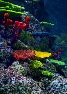earthandanimals:   Underwater bySenthil Kumar Damodaran