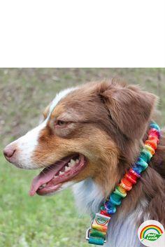 Best Dog Leash for Medium-XL dogs.