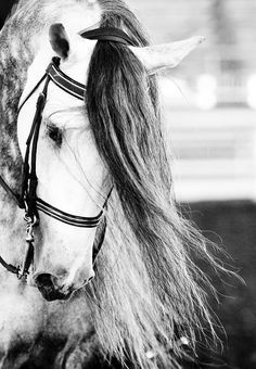 omg this horse is so pretty!!!!