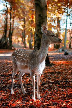 plasmatics: Bambi in the forest [via/more] By Kim Schandorff