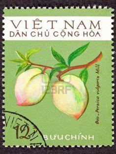 North Vietnamese postage stamp peach (prunus persica) on branch.   formerly persica vulgaris. Stock Photo