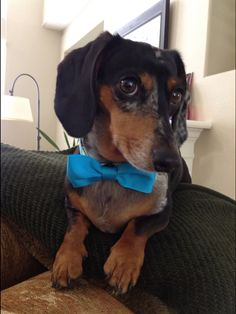 I wear Bow ties, and bow ties are cool because I'm the Doxtor!