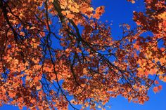 Fall leaves. Photography. Beautiful colors.
