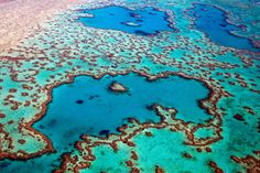 It's the world's biggest coral reef system, home to some 400 types of coral. In the past 18 months, rising ocean temperatures helped cause the single greatest loss of coral ever recorded there.
