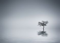 Tree by Bess Hamiti on 500px
