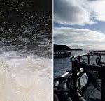 Scotland's wild fisheries must have a robust management system in place to ensure they are equipped to meet all the challenges and opportunities in the 21st century. - See more at: http://aquaculturedirectory.co.uk/wild-fisheries-review/#sthash.1QPmpjyj.dpuf