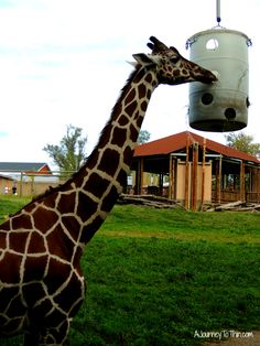 A trip to Blank Park Zoo in Des Moines, Iowa