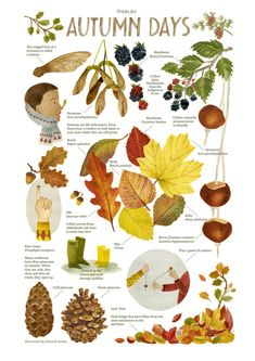 Trickes for Autumn Days - Illustration by Hannah Bailey from HB Illustration