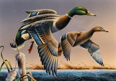 2015 Federal Duck Stamp Contest Entry 046