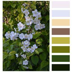 Azahar. paleta de colores Color Combinations, Color Schemes, Colour Palettes, San Antonio, Flow, Plant Leaves, Colours, Ideas, Art