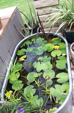 awesome backyard ponds and water garden landscaping ideas 00016 Garden Landscaping, Outdoor Gardens, Modern Garden, Garden, Water Features In The Garden, Plants, Water Trough, Backyard, Container Water Gardens