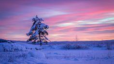 Скачать обои сугробы, снег, зима, Швеция, Вермланд, сосна, дерево, Sweden, Arvika, Varmland County, Арвика, закат, раздел пейзажи в разрешении 1920x1080