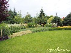 Marzenia i plany vs. rzeczywistość - strona 208 - Forum ogrodnicze - Ogrodowisko