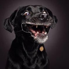 De nouvelles photos de chiens attrapant une croquette  2Tout2Rien