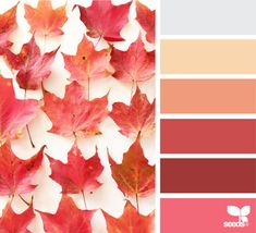 { fallen hues } image via: The post Fallen Hues appeared first on Design Seeds. Fall Color Palette, Colour Pallette, Color Palate, Colour Schemes, Color Combos, Colour Colour, Design Seeds, Color Concept, Palette Design