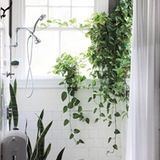 Beautiful Oversized Hanging Plants | Apartment Therapy