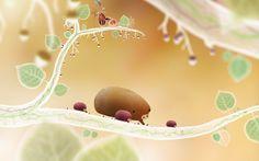 Botanicula - Amanita Design