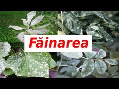 Fruit Trees, Grape Vines, Avocado, Solar, Herbs, Gardening, Home, Agriculture, Plant